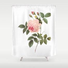 Vintage Pink Rose [04] Shower Curtain