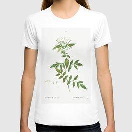 Jasmine (Jasmin officinale) from Traite des Arbres et Arbustes que lon cultive en France en pleine t T-shirt