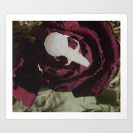 Rodent Skull Art Print