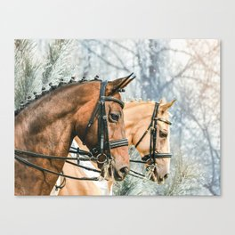 Two braided horses, side view portrait, winter background Canvas Print