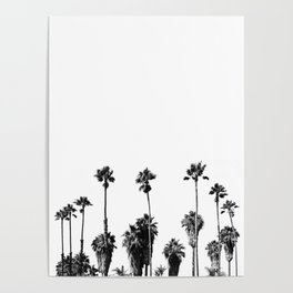 101 Palm Trees Poster