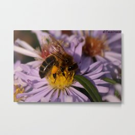Hungry Honey bee Metal Print
