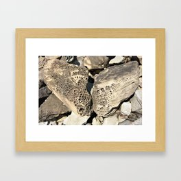 Stone Lace Wings Rock Boulder Washington Northwest Geology Geologist Sandstone Chuckanut Formation Framed Art Print