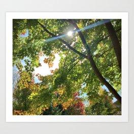 Blue Streak of Sunshine Amongst Autumn Tree's Art Print