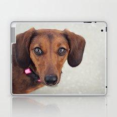 Doxie Dares You  Laptop & iPad Skin