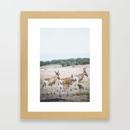 Just relaxing Framed Art Print