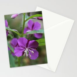 Pretty Fireweed 3 Stationery Cards