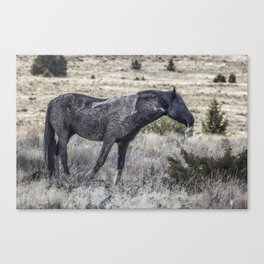 I Don't Mind Getting Dirty Canvas Print