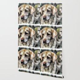 Labradors fun in the mud Wallpaper