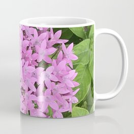 Pink Starburst Flowers Nestled in Green Leaves Coffee Mug