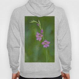 Beauty in nature, wildflower Gladiolus illyricus Hoody