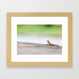 Monitor lizard Framed Art Print