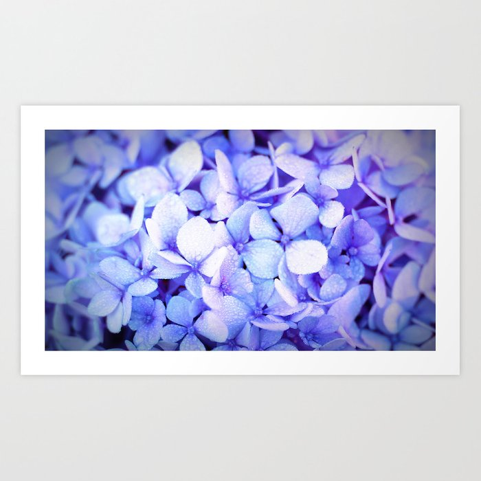 Periwinkle Hydrangea Flowers Kunstdrucke