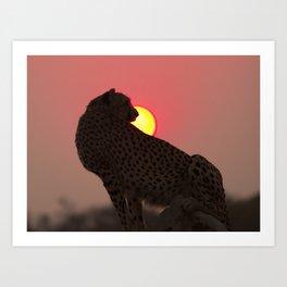 Cheetah At Sunset Art Print