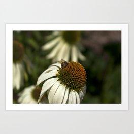 Bee Pollen I Art Print