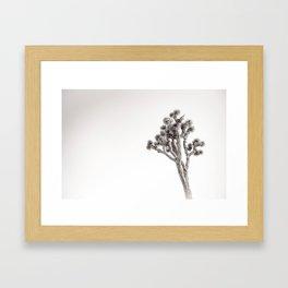 Joshua Tree in Black & White Framed Art Print
