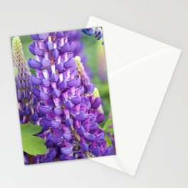 Longwood Gardens - Spring Series 118 Stationery Cards