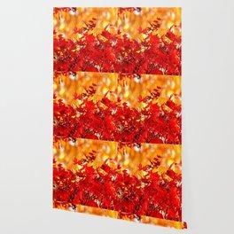 RED AND ORANGE AUTUMN Wallpaper
