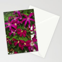 Clematis viticella Mme Julia Correvon Stationery Cards