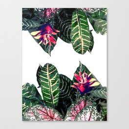 Tropical Theme 1 Canvas Print
