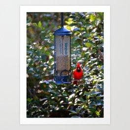 Cardinal At Bird Feeder Art Print