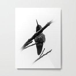 Halcyon Hummingbird Metal Print