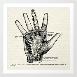 Vintage Anatomy Illustration of the Palm of the Hand Art Print