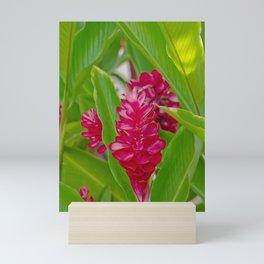 Alpinia purpurata Jungle King Red Ginger Tropical Flowers Lāhainā Maui Hawaii Mini Art Print