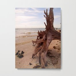 Sanibel Driftwood II Metal Print