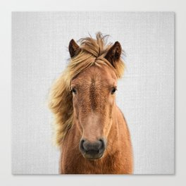 Wild Horse - Colorful Canvas Print