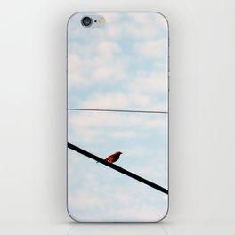 Song Bird 3 iPhone Skin