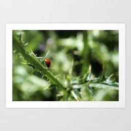 A (lady) Bug's Life  Art Print