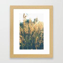 Golden Hour Hangout Framed Art Print