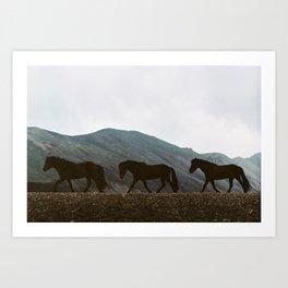 Iceland - Horses (Leica M3 & Kodak film) Art Print