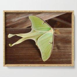 Luna moth Serving Tray