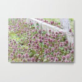 Purple Bloom Metal Print