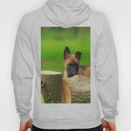Cute Malinois Dog after the wood Hoody