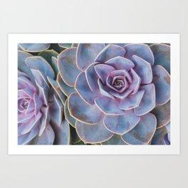 Vivid Succulents Art Print