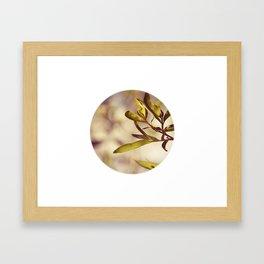 Leaf No. 1 Framed Art Print