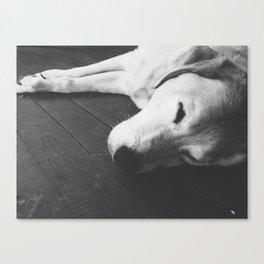 Napping Dog  Canvas Print
