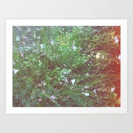 FLOWERS IN THE BRUSH Art Print