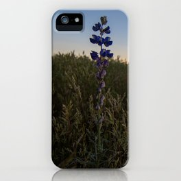 Purple Lupines at Sunset iPhone Case