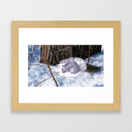 Lovely Squirrel in Montreal Framed Art Print
