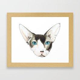 Hairless Cat Framed Art Print
