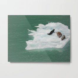 Seals on an Iceberg Metal Print