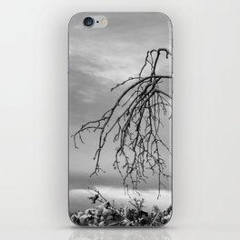 342 | bastrop state park iPhone Skin