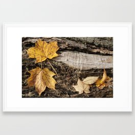 Autumn Leaf #2 Framed Art Print