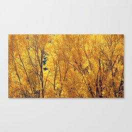 Colorado Gold Canvas Print