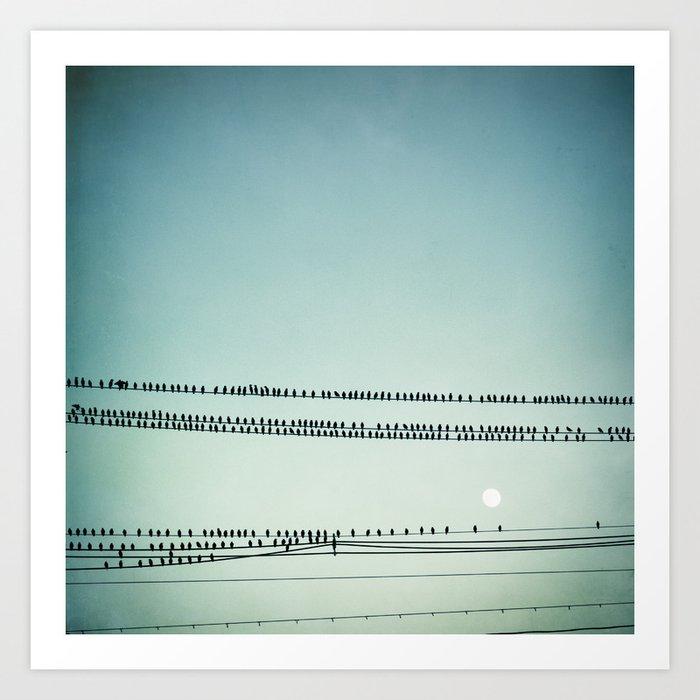 Birds on Wire Blue Photography, Flock Birds Telephone Wires Art ...