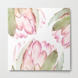 Pink Protea Flower Metal Print